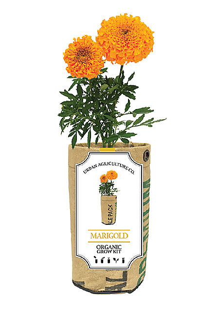 Urban Agriculture Co. Marigold Organic Grow Kit